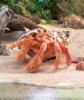 "Hermit Crab Hand Puppet 13"" by Folkmanis"