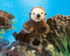 "Baby Sea Otter Hand Puppet 12"" by Folkmanis"