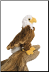 "Colbert Eagle 8"" by Douglas"