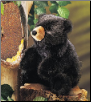 "Baby Black Bear Hand Puppet 9"" by Folkmanis"