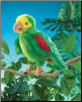 "Amazon Parrot Hand Puppet 18"" by Folkmanis"