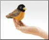 Mini Robin Finger Puppet by Folkmanis