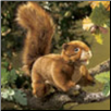 "Red Squirrel Hand Puppet 11"" by Folkmanis"