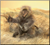 "Baboon Hand Puppet 9"" by Folkmanis"