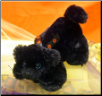 "Halloween Mini Black Cat 6"" by Wishpets"