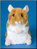 "Brushy Hamster 5"" by Douglas"