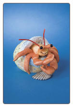 "Henry Hermit Crab with Shell 5"" by Douglas"