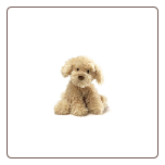 "Nayla Cockapoo 10.5"" by Gund"