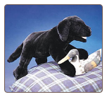 "Black Labrador Retriever Puppy Hand Puppet 20"" by Folkmanis"