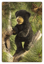"Black Bear Cub Hand Puppet 14"" by Folkmanis"
