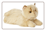 "Persian Cat Medium 11"" by Miyoni"