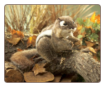 "Eastern Chipmunk Hand Puppet 8"" by Folkmanis"